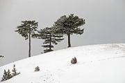 Зимний пейзаж / Сербия