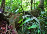 Дождевой лес / Малайзия