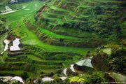 Рисовые террасы / Филиппины