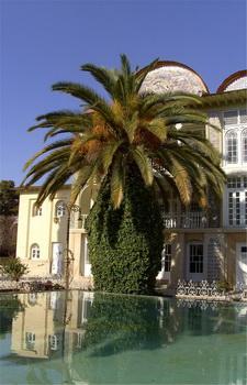 Пальмы / Иран