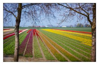 Поле / Нидерланды