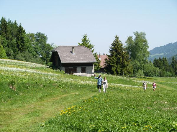 Пешком по полям Швейцарии / Фото из Швейцарии
