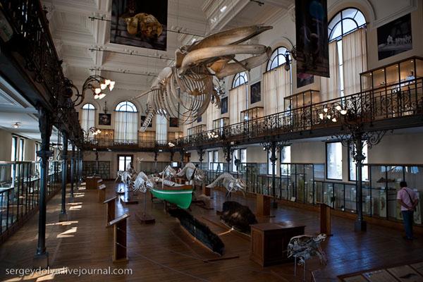 В Океанографическом музее, Монако / Фото из Монако