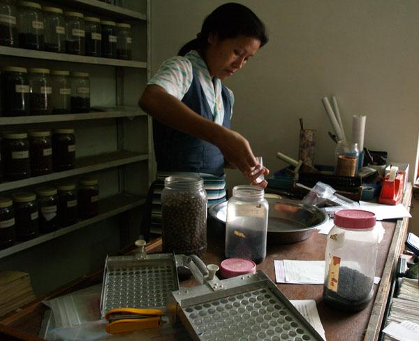 Сотрудница клиники Men-Tsee-Khang отмеряет количество таблеток-шариков / Фото из Индии