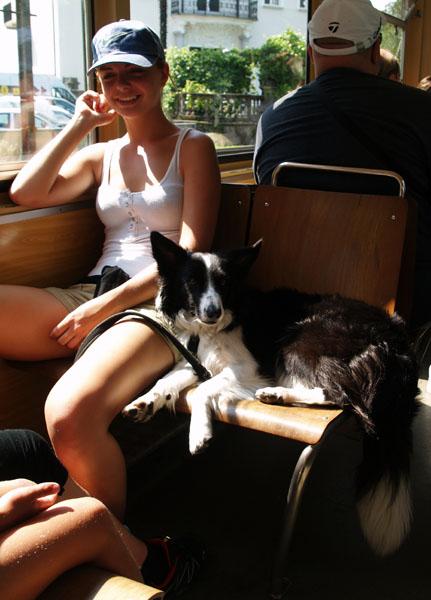 В швейцарских поездах даже собаки путешествуют с комфортом / Фото из Швейцарии