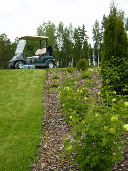 В Хяме находится самое знаменитое гольф-поле Финляндии / Фото из Финляндии