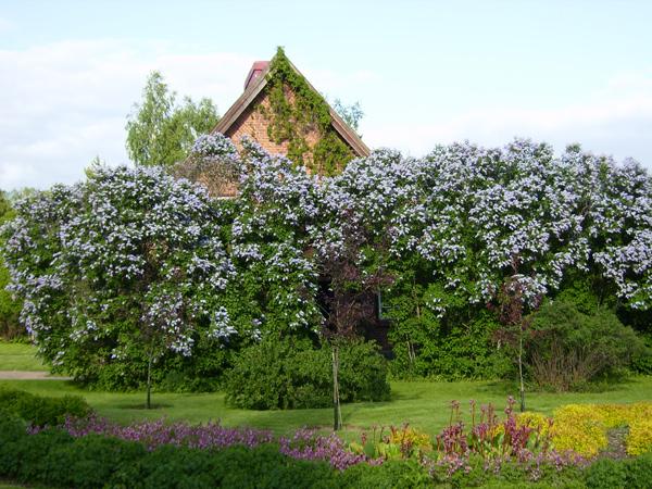 Цветущие сады у стен замка Ванаянлинна / Фото из Финляндии