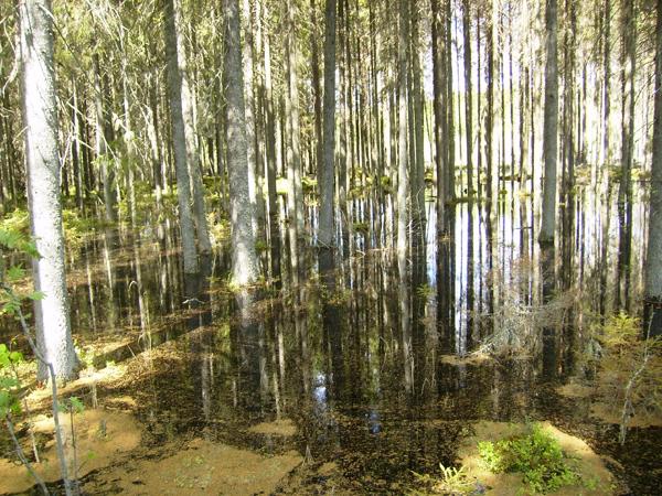 Это озеро в Хяме кропотливо создали местные бобры / Фото из Финляндии