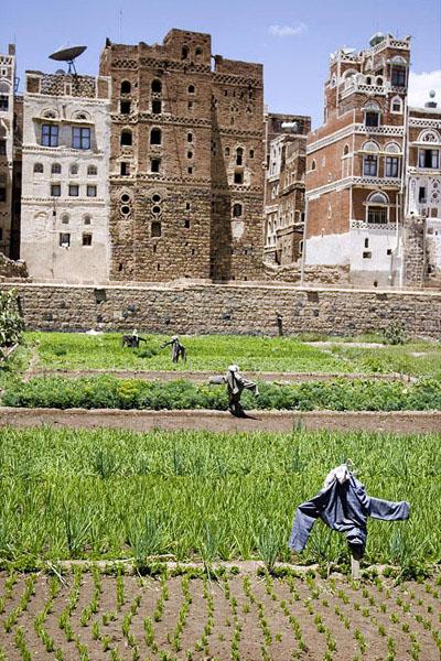 Сады города Сана, Йемен / Фото из Йемена
