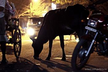 Правильная корова / Индия