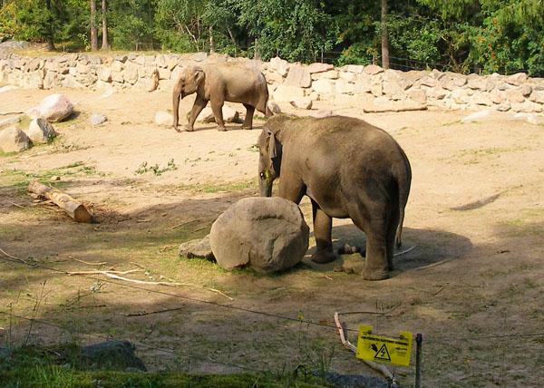 Слоновник - первое, что встретилось нам на пути / Фото из Швеции