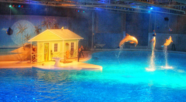 Дельфины-боксеры справятся с любыми пиратами / Фото из Швеции