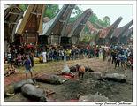 Жертвенные буйволы / Индонезия