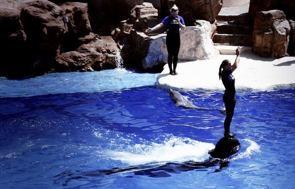 Шоу с дельфинами в парке SeaWorld, Сан-Диего / Фото из США