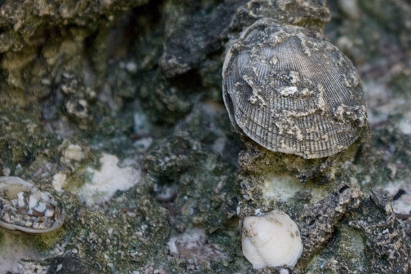 В камнях видны древние моллюски, маршрут Enigma de las rocas / Фото с Кубы