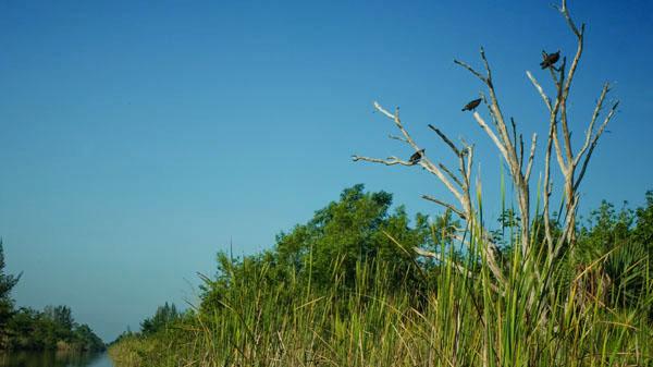 На берегах Атигуанико можно встретить птиц и животных / Фото с Кубы