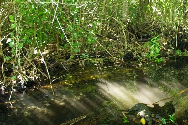 Атигуанико питают подземные источники, скрытые в тропическом лесу / Фото с Кубы
