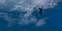 Птицы / США
