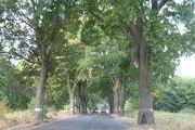 Деревья / Россия