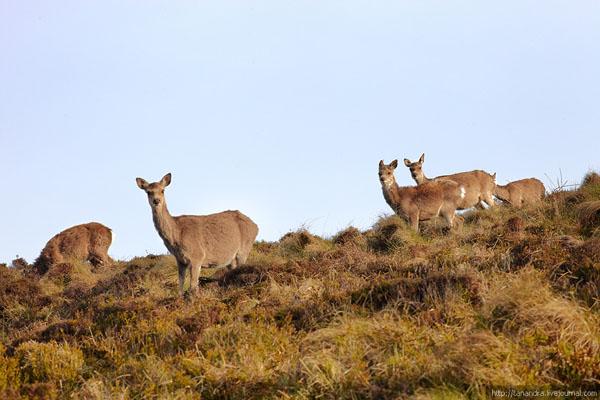 Обитатели долины Глендалох, Ирландия / Фото из Ирландии