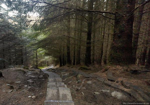 Маршрут проходит и через лес, долина Глендалох / Фото из Ирландии