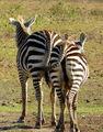 Классический африканский пейзаж / Кения
