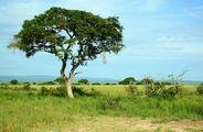 Африка / Кения