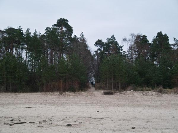 Сосновый лес и пляж в Юрмале / Фото из Латвии