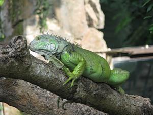 Рептилия / Индонезия