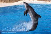 Шоу дельфинов / Испания