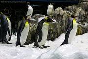 Пингвины / Испания