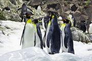 Совещание пингвинов / Испания