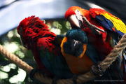 Попугаи / Испания