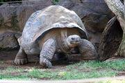 Черепаха / Испания