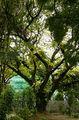 Самое старое дерево / Мальдивы