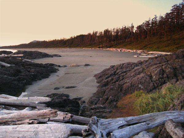 Деревья на побережье Ванкувера, национальный парк Pacific Rim / Фото из Канады