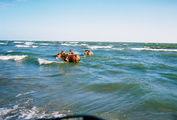 Остров Ометепе. Купающиеся лошади / Никарагуа