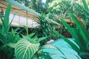 """Пуэрто-Бьехо.Отель """"Mandala Resort"""" / Коста-Рика"""