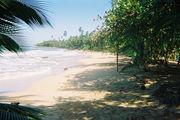 Безымянный пляж в р-не Мансанийо / Коста-Рика