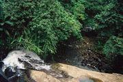 Маленькая речушка около Братси / Коста-Рика