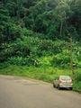 На подъезде к панамской границе / Коста-Рика