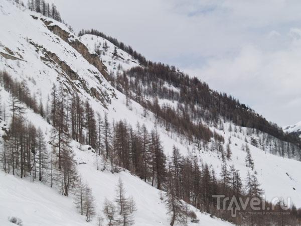 Лесистые склоны ниже Тиня / Фото из Франции
