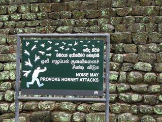 Осы / Шри-Ланка