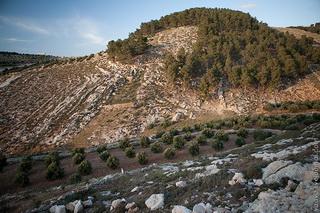 Леса между Бейт-Умар и Серифом / Израиль