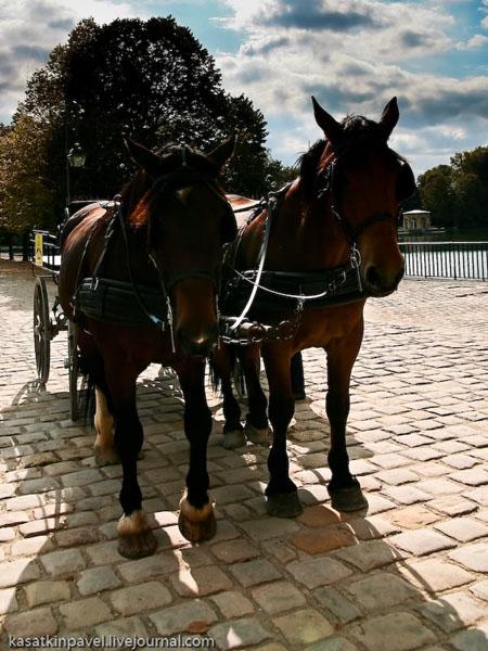 Туристы могут прокатиться на лошадях, Фонтенбло / Фото из Франции