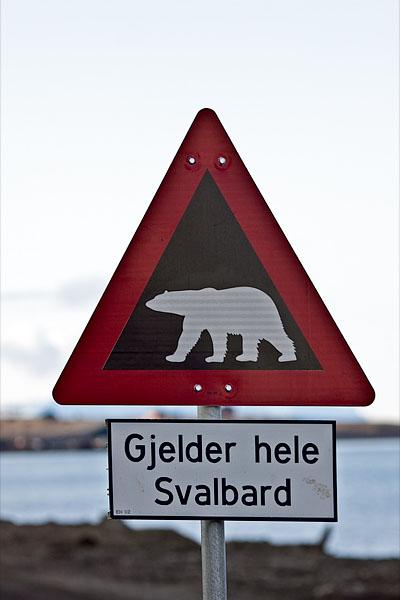 Осторожно, белые медведи!  / Фото со Шпицбергена