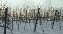 Долина под снегом / Италия