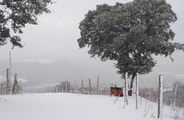 На ферме / Италия