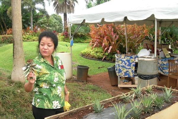 """""""Главная по ананасам"""": экскурсовод полинезийского происхождения рассказывает, как растут ананасы / Фото из США"""