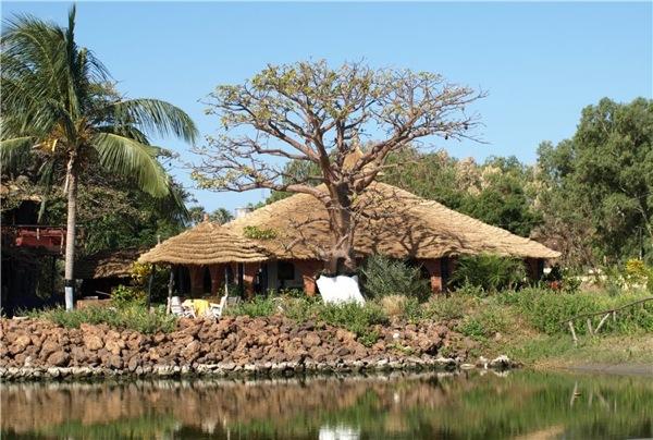 Гамбийский пейзаж / Фото из Гамбии